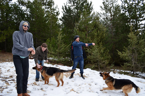 Throwing snow at the Sakintepe dogs
