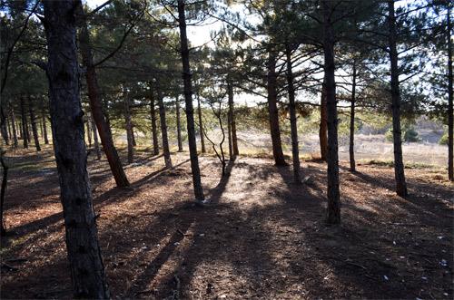 METU Forest