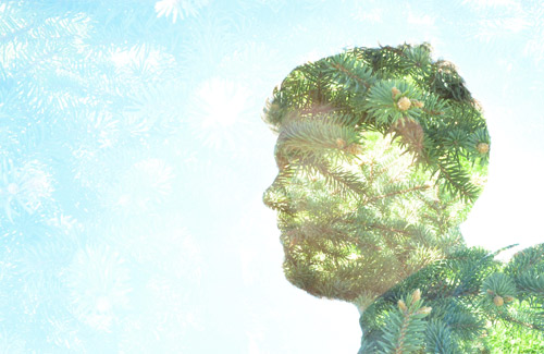 Double exposure with pine