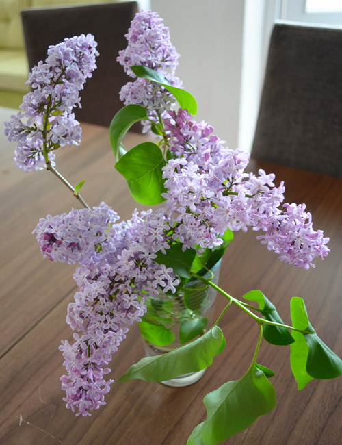 Lilac Cuttings