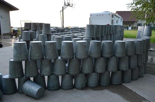 Drying maple buckets