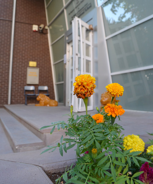 Flowers outside the school