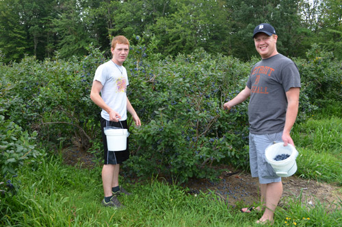 Sam and David picking blueberries