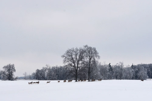 Deer running in the snow