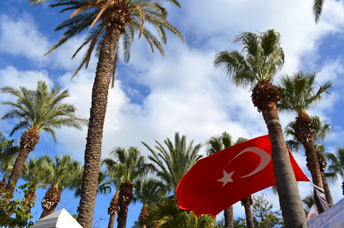 Bodrum palm trees