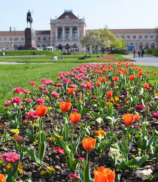 Spring tulips in Zagreb