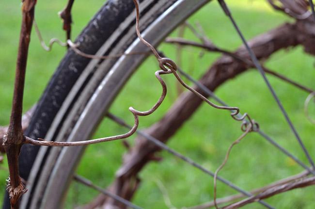 Schwinn Hawthorne bike with a vine