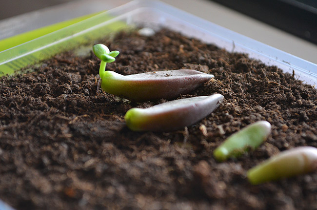 Plant Propagating