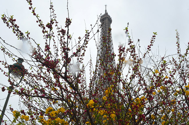 Eiffel Tower through flowers