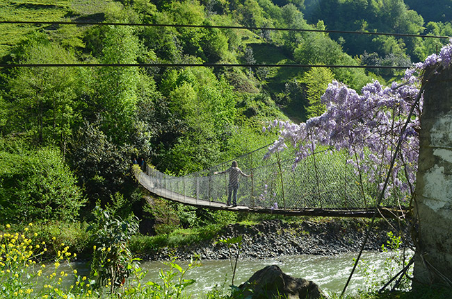 Bridge with wisteria