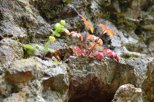 Plants growing out of rocks