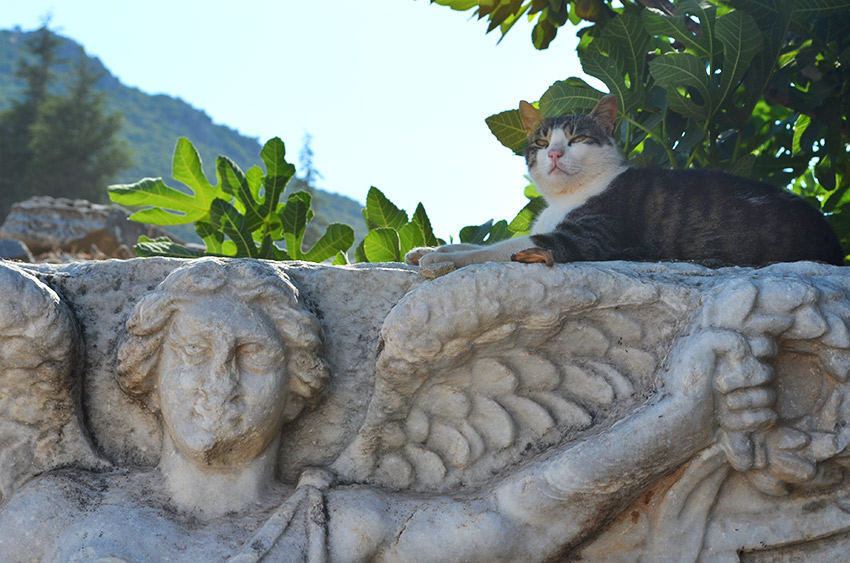 Nike Athena and Ephesus kitty