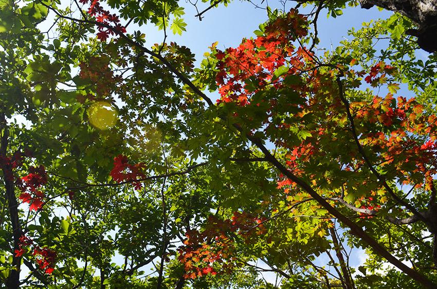 Seoraksan trees