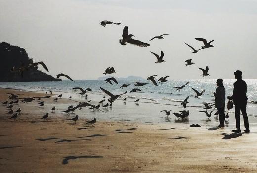 People feeding seagulls