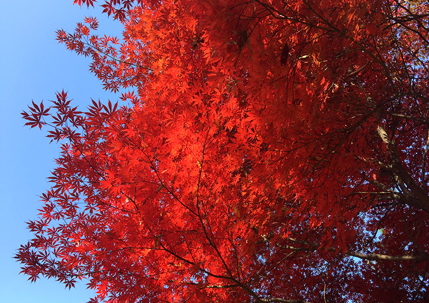 Burning red tree