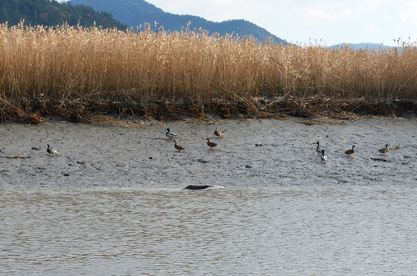 Otter and birds