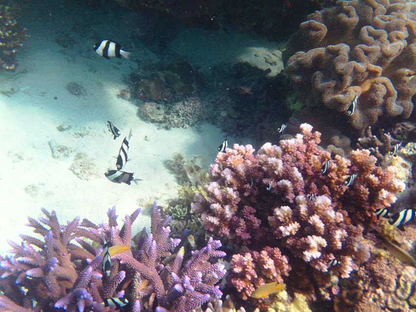 Fish and coral in Moalboal