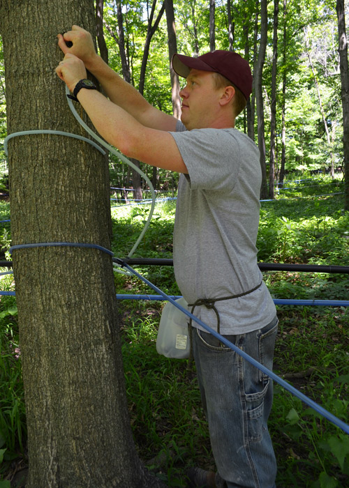 Cleaning maple lines