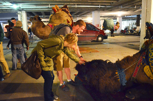 Petting a camel in a parking garage