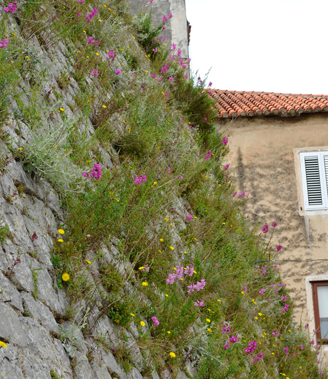 Flowers growing in a wall