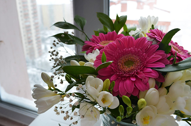 Pink Gerber Daisy and white flowers